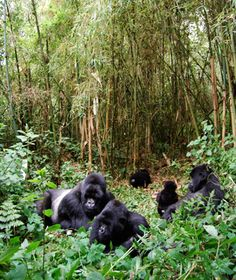 World's most endangered sites: Congo: Virunga National Park Seychelles, Uganda, Montenegro Travel, Aquatic Ecosystem, Mountain Gorilla, Congo Kinshasa, Thinking Day, African Countries, Africa Travel