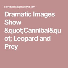 "Dramatic Images Show ""Cannibal"" Leopard and Prey"