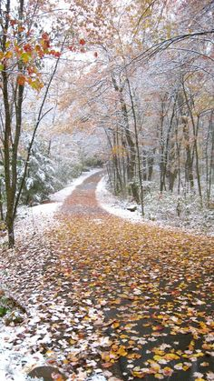 Autumn snow, Litchfield, CT by Walks Across