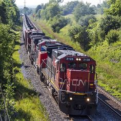 A snake of crude oil tank cars heads up the grade lead by 2128 which is sporting a special paint scheme commemorating the 15th anniversary of CN's privatization.  Train ID U700  Locomotive(s) #CN2128 C40-8 #CN2590 C44-9W & #CN2598 C44-9W  Location Lovekin Ontario Canada  Date July 10 2015  #CanadianRailway #RailwaysOfCanada #train_nerds #trains_worldwide #railfan #rail_barons #locos_of_america #north_american_rail_pictures #splendid_transport #daily_crossing  #instalogistics #tv_transport…
