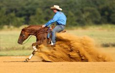 Image result for casey deary reining