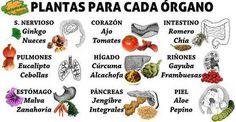 plantas medicinales para cada organo y afectacion