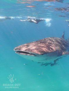 finding nemo krill swim away