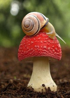 smurfberries and snail!