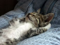 Funny Sleeping Cat Picture