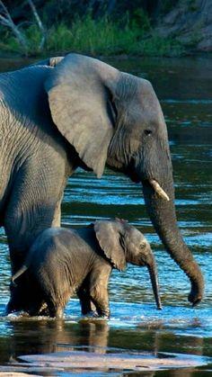 iki ayaklıda olsa dört ayaklıda olsa bebeklerin hiç farkı yok annenin parçası.