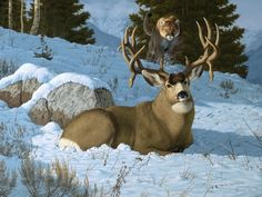 Blind Spot Bedded and soaking in the warm sun, this big mule deer buck has no clue of the incoming cougar, or mountain lion. Wildlife Paintings, Wildlife Art, Animal Paintings, Deer Paintings, Cabras Animal, Deer Bedding, Animals Beautiful, Cute Animals, Mule Deer Buck