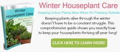 Do you ever feel like giving up on growing houseplants? You need this book! Winter Houseplant Care: Keeping Indoor Plants Alive When It's Freezing Outside.