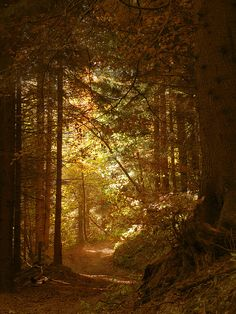 The way out of the dark forest is by the golden ray of light by natasa10, via Flickr