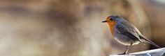 covers birds - Buscar con Google