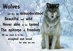 Beautiful wolves and wolf quotes . Wolf Pack Quotes, Wolf Qoutes, Lone Wolf Quotes, Wisdom Quotes, Quotes To Live By, Me Quotes, Wolf Poem, Types Of Wolves, Of Wolf And Man