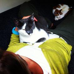 Mijn liefste dierenhuisgenoten!