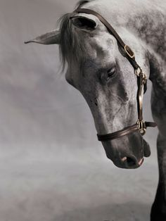 Shelli Breidenbach genius photography of horses