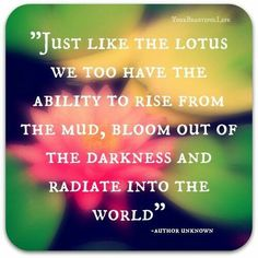 Just like the lotus we too have the ability to rise from the mud, bloom out of the darkness and radiate into the world