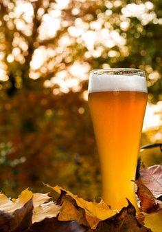 Colorado's Top 10 brewery beer gardens, patios and decks