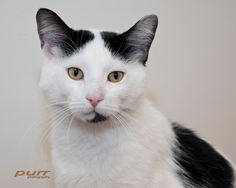 Roger Waters in need of forever home