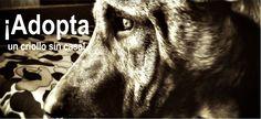 Promovemos el respeto y la protección de los animales, nuestras campañas son en favor de la vida, la protección y la preservación del ser vivo.