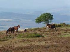 England's Quantock Hills - Bing Images
