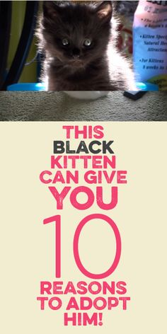 This Black Kitten Can Give You 10 Reason To Adopt Him! :)