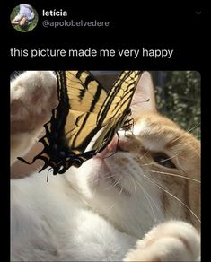 Funny Animal Memes, Cute Funny Animals, Cute Baby Animals, Cat Memes, Animals And Pets, Cute Cats, Funny Cats, I Love Cats, Crazy Cats