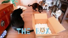 Funny Cats Vlog 28 - Four cats and a box - YouTube