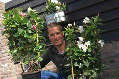 HILVERSUM - Zondag is het moederdag. De bloemendag bij uitstek. Maar wat geef je nu: een boeket of een plant? Er is zoveel keus.Wat denk je van een bloeiende Mandevilla, morgen te zien in Robs Grote Tuinverbouwing.Of een vrolijk boeket met Alstroemeria's? Je kan van pureeenvoud tot bont bohemien.