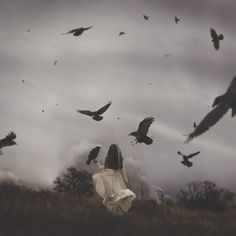 Lensblr: (Talaina Fisher) | An Unkindness of Ravens by...