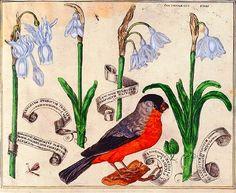 Botanical - Livres de Fleurs 1620