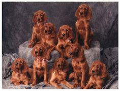racimo de perritos