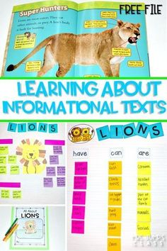 Informational text features lessons for reading and writing while studying lions! Through close reading students study the features on non-fiction books. Comprehension lessons on building schema, inferring, and opinion writing includes anchor charts and c
