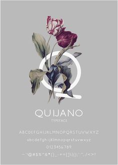 QUIJANO TYPEFACE   FREE FONT By VQ