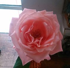 Amo rosas...