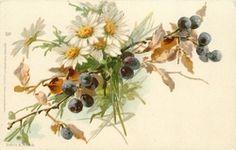 Daisies and blueberries, Katherine Klein