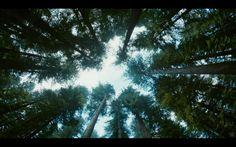 Emmanuel Lubezki's The Tree of Life 2011 - film still