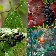 Les meilleures #plantes #veinotoniques