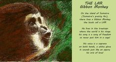 From : SONGS OF THE WILD. Available on Amazon.com Google Books Bokus Barnes & Noble Published in the USA