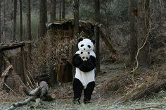 Scientists dress like pandas to care for orphaned panda cubs.