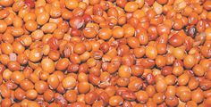 Demand for pigeon peas prompts disease research