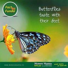Memory Mantra - Fact Ka Funda  Comment, like & Share the interesting Fact with everyone. Memory Mantra Ayurvedic Capsule and Syrup is 100% Ayurvedic Medicine - More Effective with standardized extracts without any Side Effect. #MemoryMantra Helps for #Antistress, Loss of #memory, Improves #graspingpower, reduces #depression, #anxiety. www.memorymantra.in 24X7 Helpline 0171-3055200