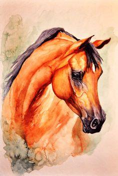 beautiful arabian horse!