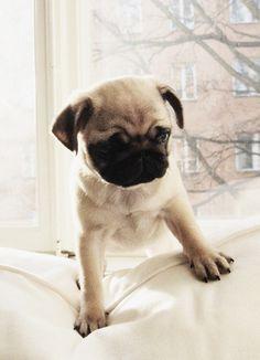 Pug. Also this one! So cute!!