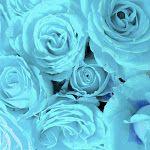 photo.jpg 150×150 pixels
