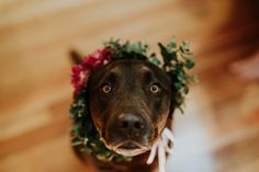 Dogs in the wedding = cutest thing ever | Image by Zoe Morley Photography