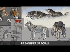 How to Draw Wolves, Coyotes & Foxes - Sneak peek (Pre-order Now) Animation Reference, Animation Film, Coyote Drawing, Webtoon Comics, Anime Wolf, Character Design Animation, Wildlife Art, Art Techniques, Animal Drawings