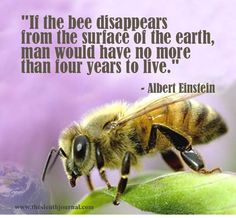 """Russia Warns Obama: Global War Over """"Bee Apocalypse"""" Coming Soon- June 4, 2013_  On 26 March, Obama quietly signed this """"Monsanto Protection Act"""" into law ensuring the American people have no recourse against this bio-tech giant as they fall ill by the tens of millions, and many millions will surely end up dying in what this MRNE report calls the greatest ag. apocalypse in human history as over 90% of feral (wild) bee pop. in the US have died, and up to 80% of domestic bees have died too."""