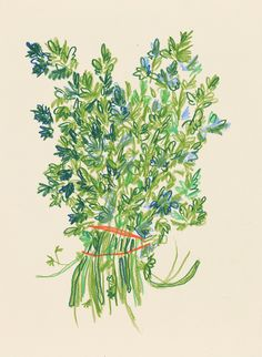"""ljegers: """"Cilantro drawing from the other month """" Pretty Art, Cute Art, Art Sketches, Art Drawings, Illustration Blume, Wow Art, Aesthetic Art, Oeuvre D'art, Collage Art"""