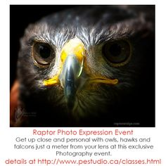 Join Photo Express and Raptor's Ridge for this exclusive Photography event. Bring lots of memory space for the amazing photographs you will take. Register now as space is limited! Photography Services, Bald Eagle, Photographs, Join, Bring It On, Creatures, Space, Amazing, Animals