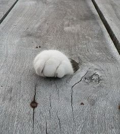 Cats are amazing. I love cat paws! Funny Cats, Funny Animals, Cute Animals, Crazy Cat Lady, Crazy Cats, I Love Cats, Cool Cats, Cat Paws, Dog Cat