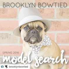 #Repost @brooklynbowtied with @repostapp.  You still have 10 more days to enter our model search! Don't miss out!  It's that time again! Brooklyn Bowtied is looking for 4-6 new dog models to add to our team for Spring 2016!  How to enter: 1.) Make sure you are following @brooklynbowtied 2.) Repost this photo with the tag #brooklynbowtiedsp16 so we can find your entry!  3.) Tag up to ten of your best photos with the same tag.  4.) Official Brooklyn Bowtied Models receive an initial product…
