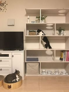 Cat Wall Shelves, Cat Climbing Shelves, Cat Walkway, Diy Cat Enclosure, Cat Wall Furniture, Cat Castle, Cat Bedroom, Diy Cat Tree, Space Cat